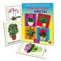 Дидактическое пособие Комнатные Цветы картон 16,5х21,5х0,4см ПД-9521